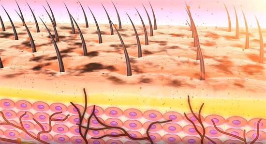 计算机新兴技术:医学3d动画制作