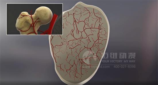 医疗演示动画在医学、美容中的应用